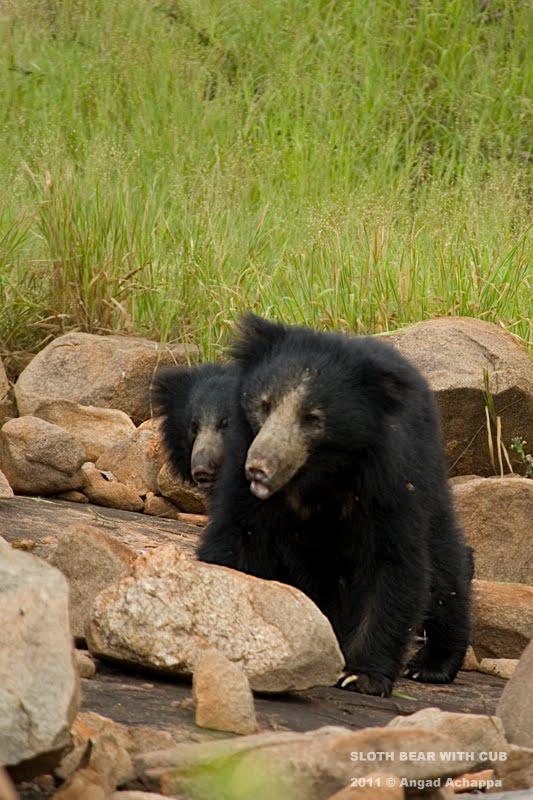Wildlife Photography Daroji Bear Sanctuary Heaven For