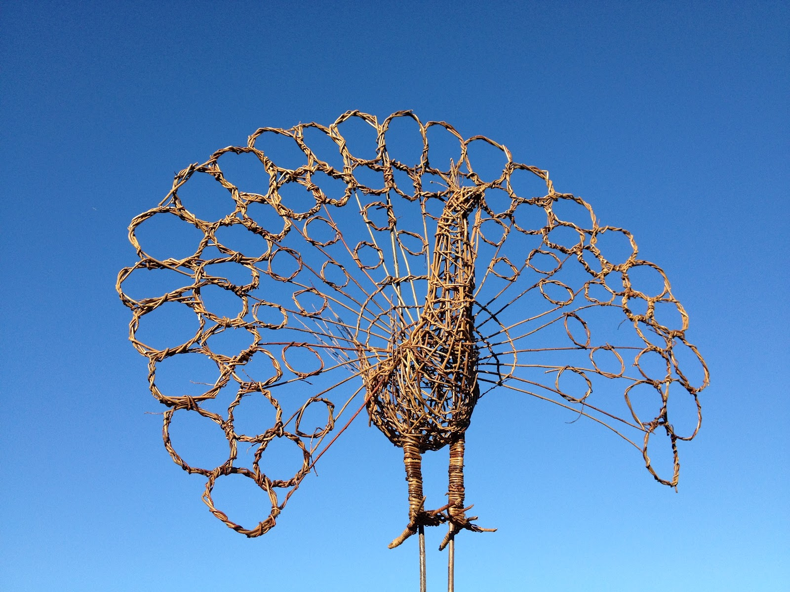 Willow And Wire Eco Sculpture Peacock Of Willow