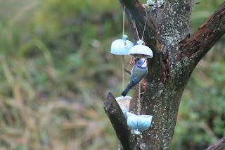 Mitä Linnut Syövät