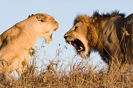 lion movie4k