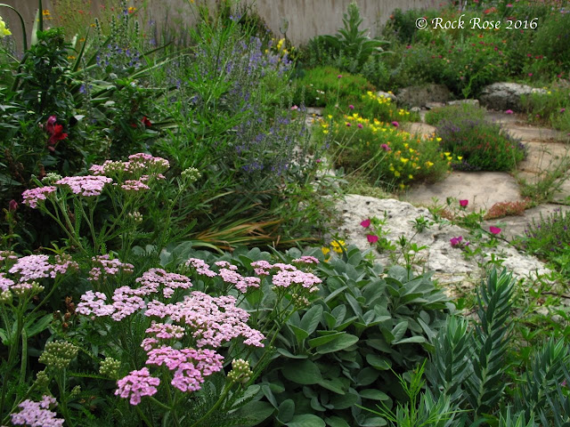 ROCK ROSE: I HAVE THE COTTAGE GARDEN GENE on texas rock home designs, texas landscape pool design ideas, texas rock garden landscape, texas rock patio designs, texas native plant garden designs,