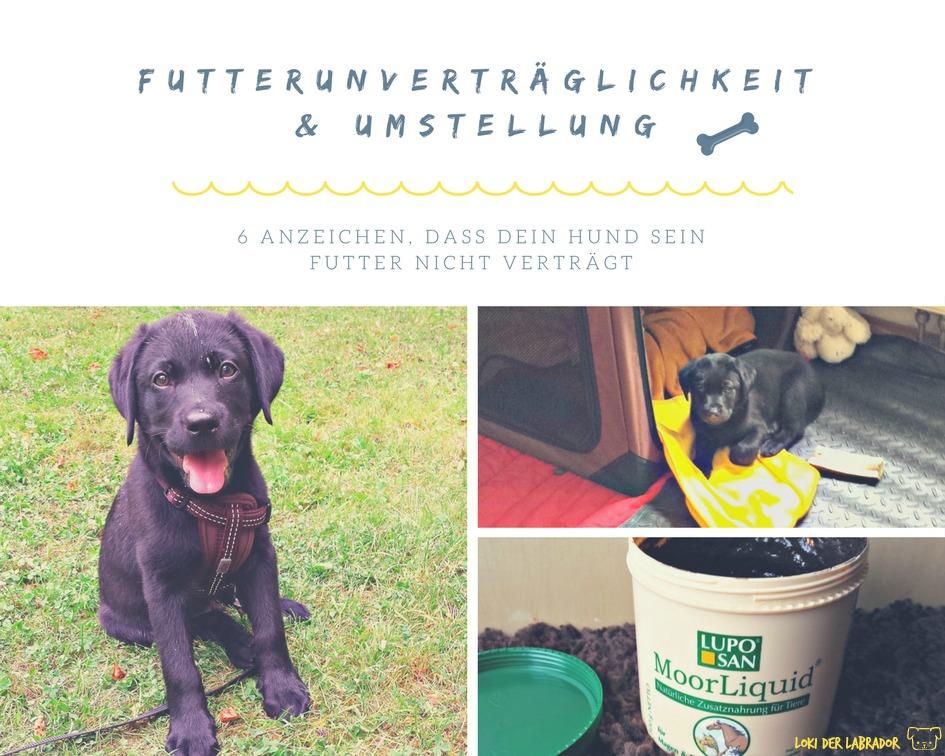 Fotocollage Futterunverträglichkeit Hund