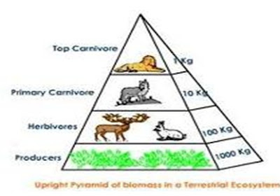 Piramida Biomassa