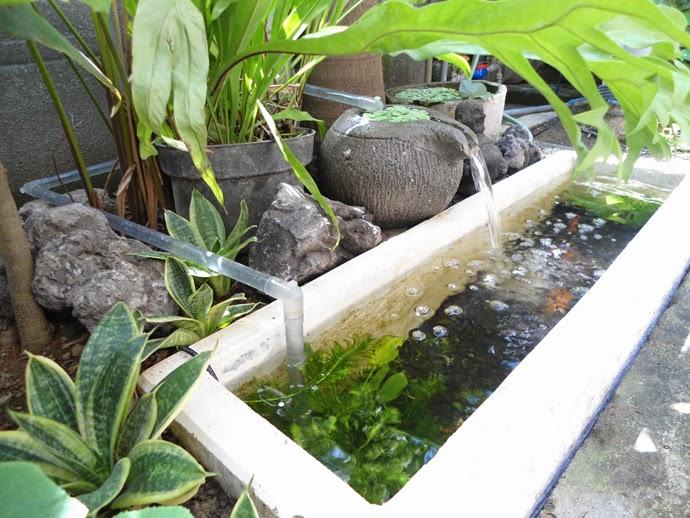 Kolam Ikan Koi Membuat Kolam Ikan Koi Kecil Di Depan Rumah