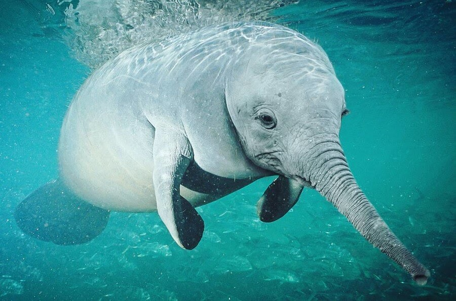 07-Elephant-Manatee-AOG-Fredriksen-Animal-Art-www-designstack-co