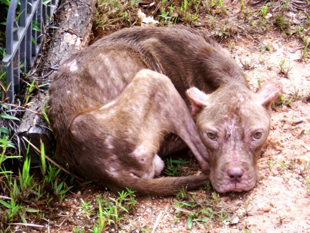 Lucky Dog Rescue Blog: Patrick Star