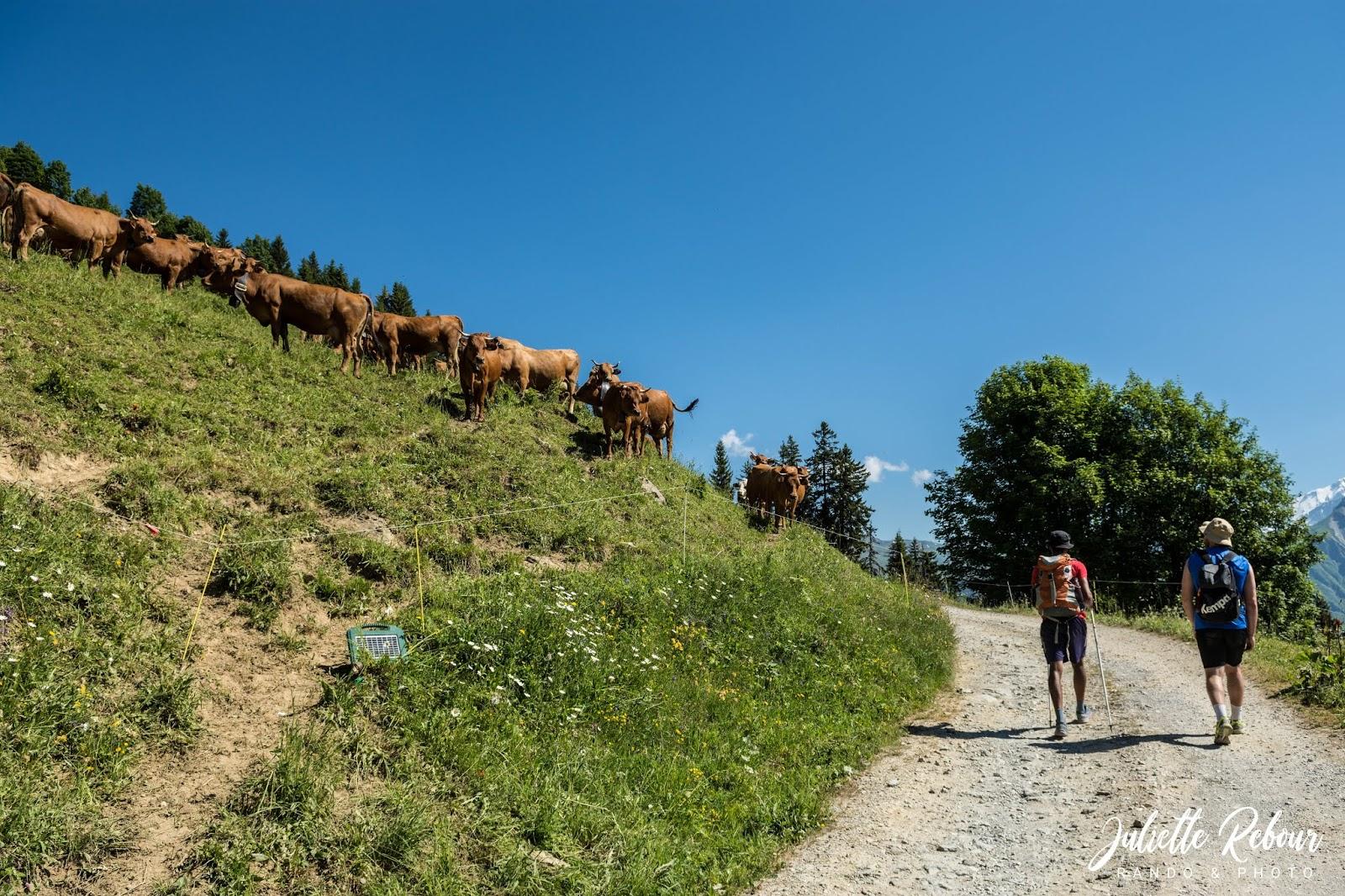 Randonnée près des alpages en Savoie