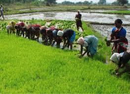 Boosting Nigeria's Real Estate, Agric Sectors Via Strategic Partnerships 1
