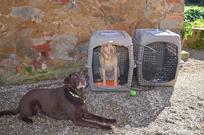 Flying Dogs To Italy : Boomer and Harley check out their crates at La Tabaccaia outside Castiglion Fiorentino, Italy
