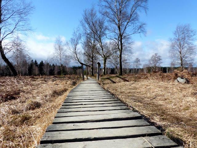 Struffeltroute Hohes Venn Wandern mit Hund Frühling Ostern