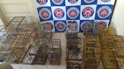 3ª Cia apreende 17 pássaros silvestres criados ilegalmente em Jaguaripe