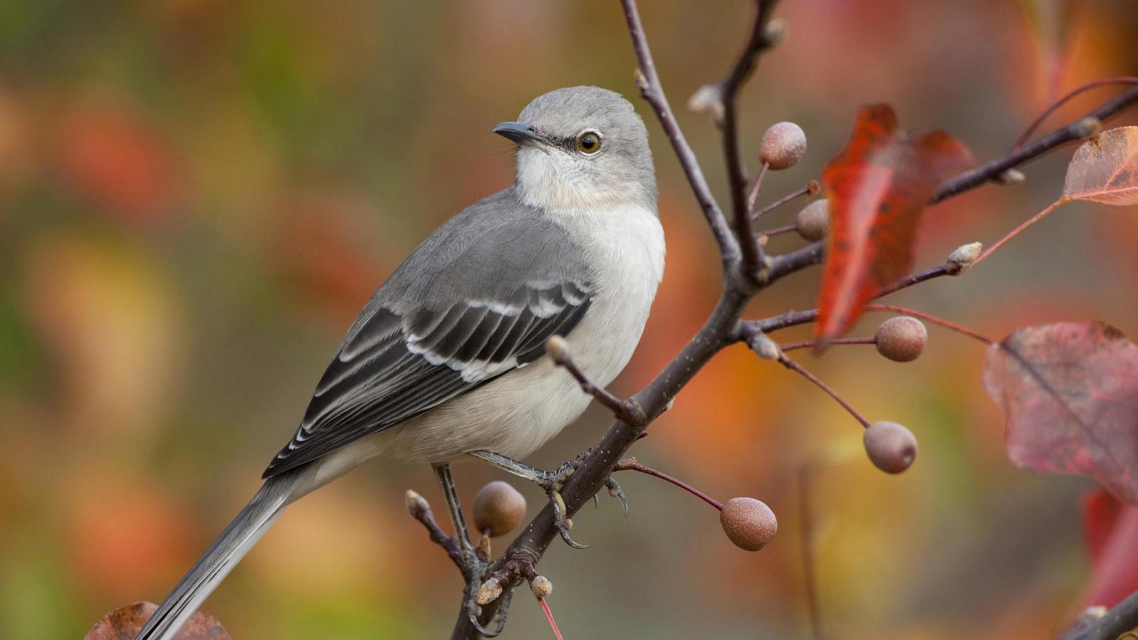 Birds wallpapers desktop wallpapers - Animal and bird hd wallpaper ...