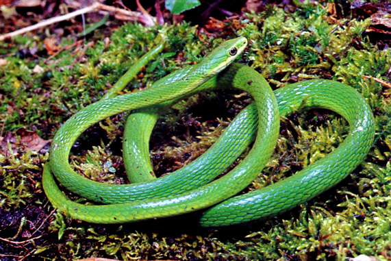 wild animals names common name list by snakes