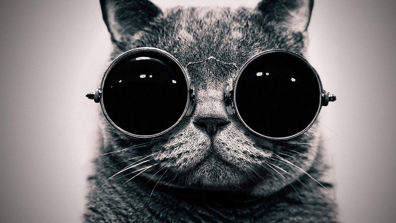black+cat+desktop+wallpaper