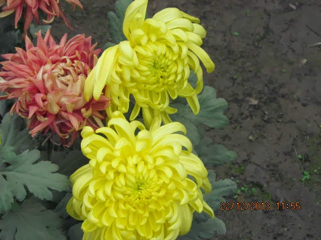 magic flower in blooming - photo #26