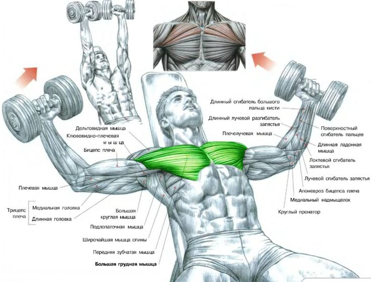 Yeazfitcenter Bench Dumbbell Fly Flat Incline Decline