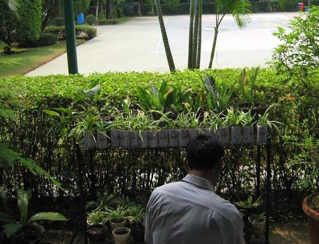 salah satu jadwal kementrian negara lingkungan hidup yang bertujuan untuk mendorong terci Pengertian Adiwiyata, Tujuan, Fungsi, Kriteria & Manfaat Program Adiwiyata