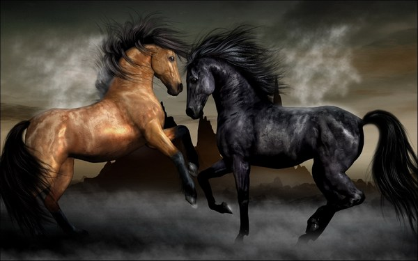 Pictures of Horses Clash with Each Other in HD