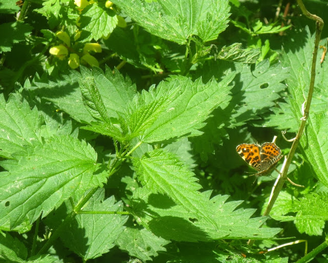 Bad Berneck: Spaziergang im Kurpark - Flora und Fauna