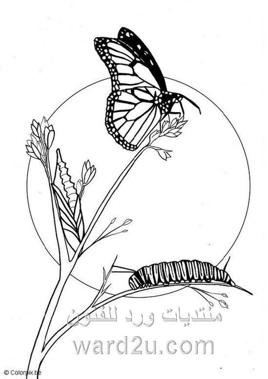 Kleurplaten Vlinders En Rupsen.Kleurplaten Vlinders En Rupsen Vlinders Kleurplaten