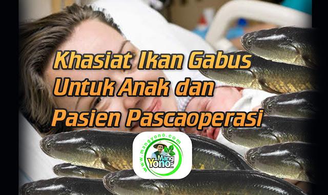 Khasiat Ikan Gabus untuk Anak dan Pasien Pascaoperasi