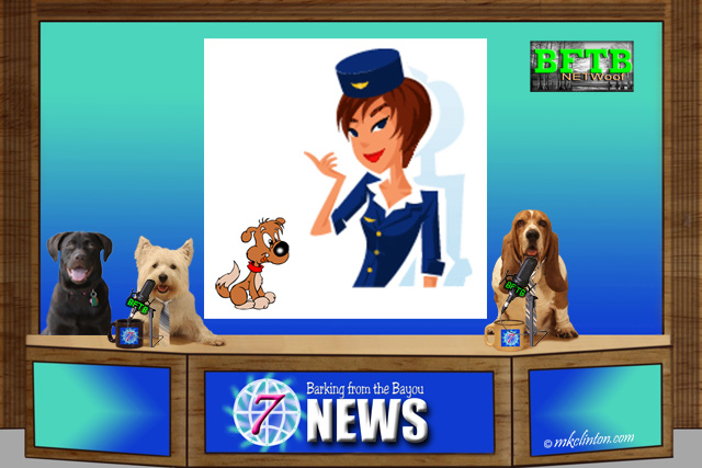 BFTB NETWoof News desk with dog & flight attendant on back scrren