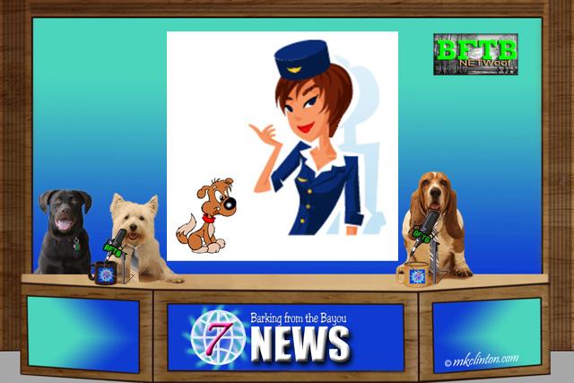 BFTB NETWoof News desk with dog & flight attendant on back scrren
