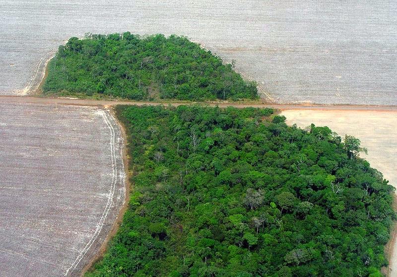 Fragmentação, Efeito de Borda e Perda de Biodiversidade