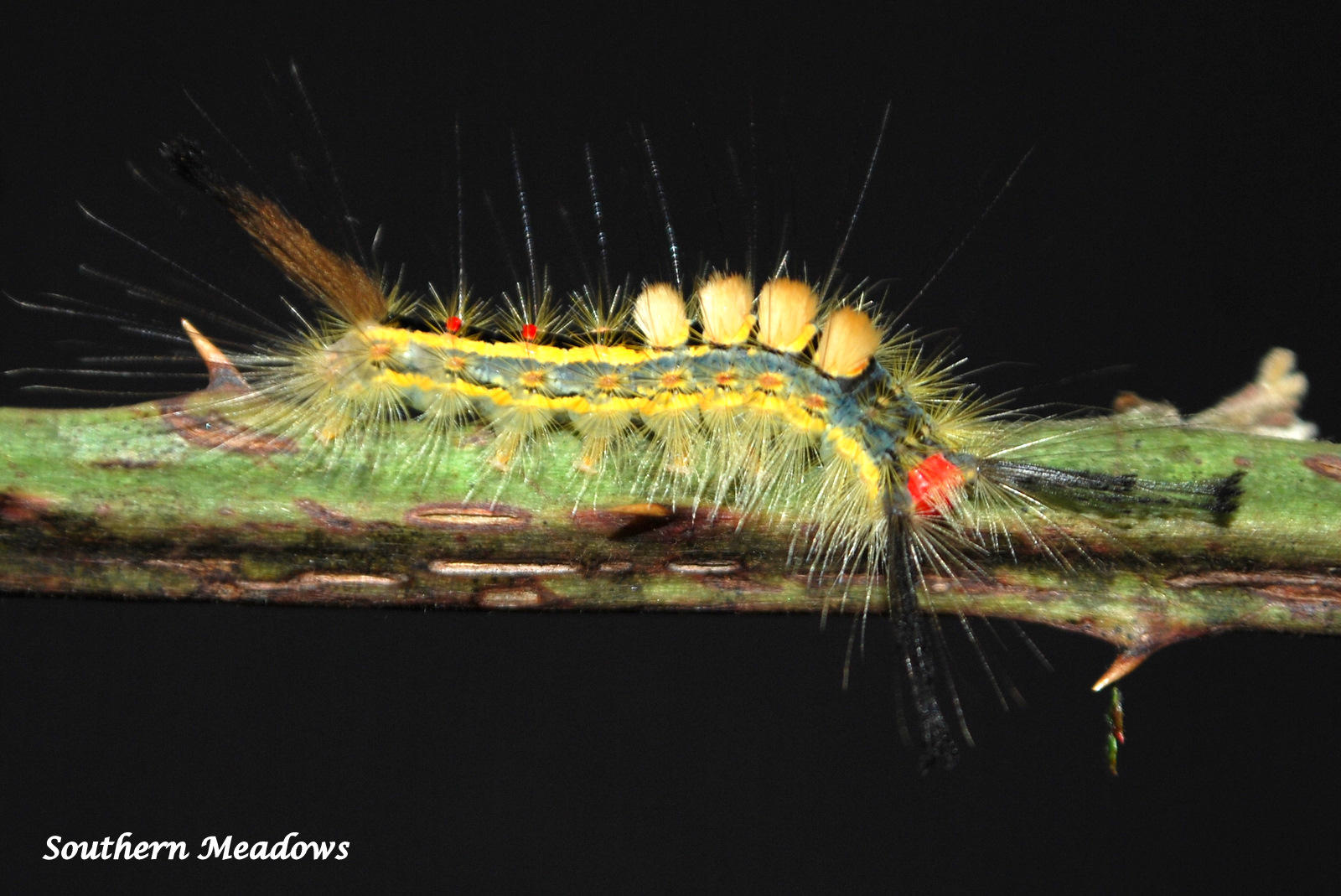 Green Caterpillar With Black And Yellow Stripes
