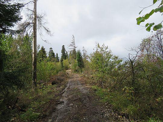 Zejście ze szczytu Żar.