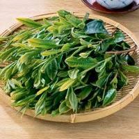Tuần mới tươi trẻ với lá trà xanh