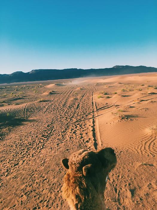 camelll