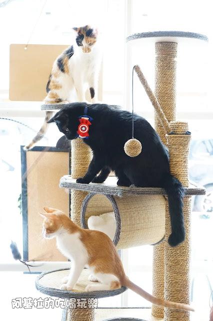 14524414 1099288986791012 4566495822354504459 o - 熱血採訪|朵貓貓咖啡館 - 貓咪餐廳