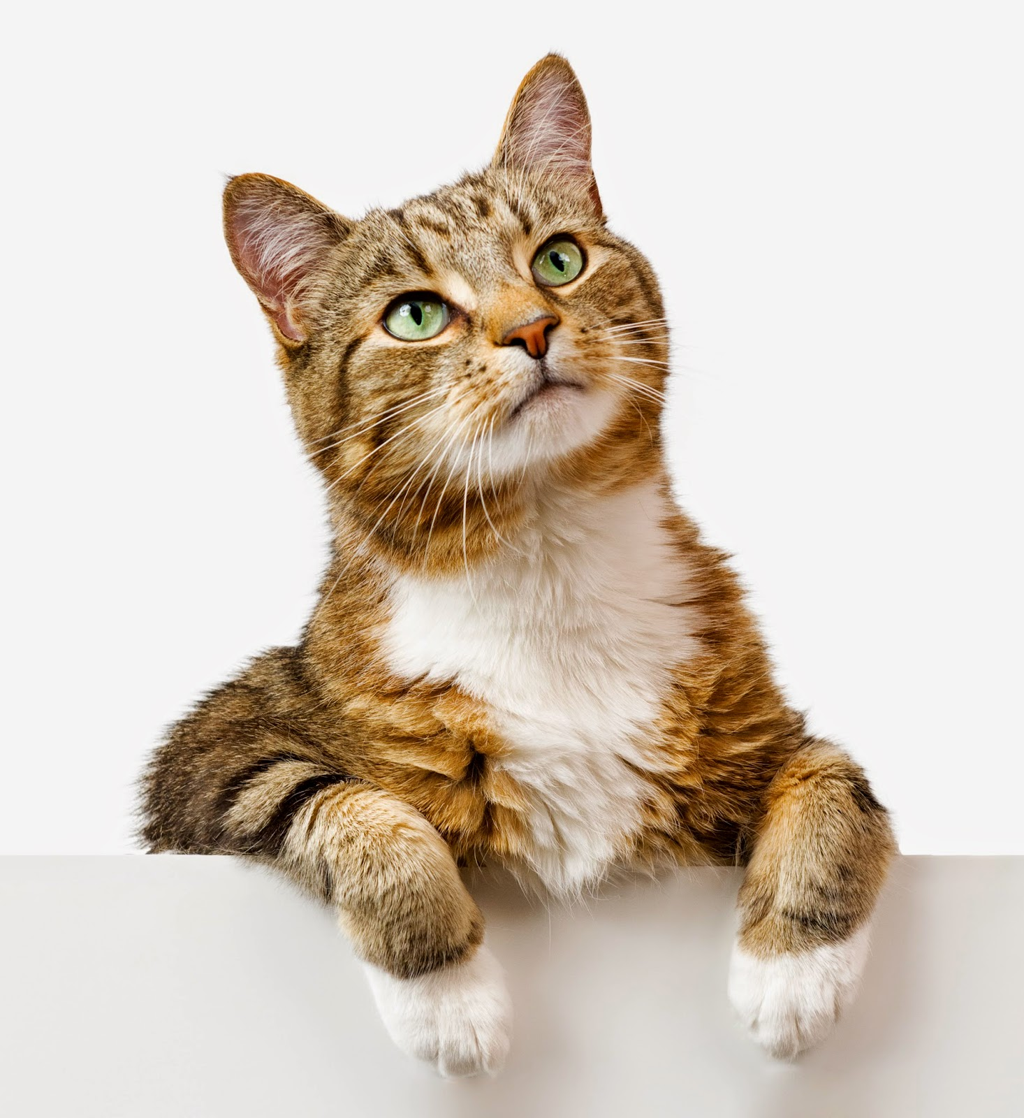 Medi-Vet Blog For Pets: Ten Need-to-Know Cat Facts