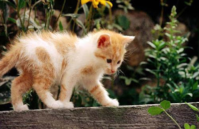 White-and-Yellow-CatHD-pictures