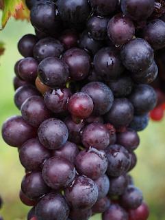 Yang Suka Dengan Buah Anggur.. Berikut Khasiat Mengejutkan Anggur Bagi Kesehatan Tubuh
