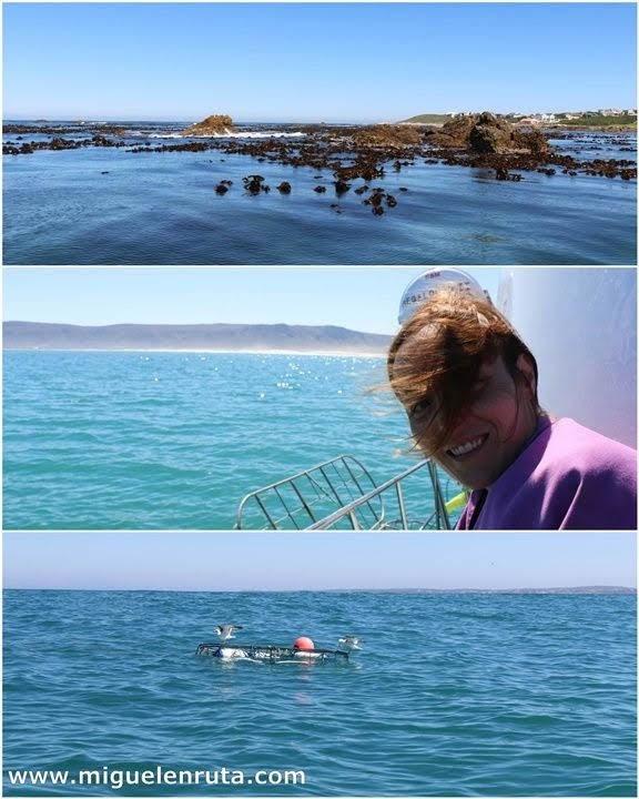 Frente-a-la-costa-de-Dyer-Island