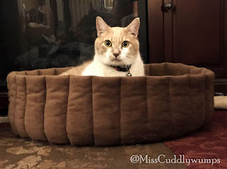 Real Cat Webster in brown cat bed
