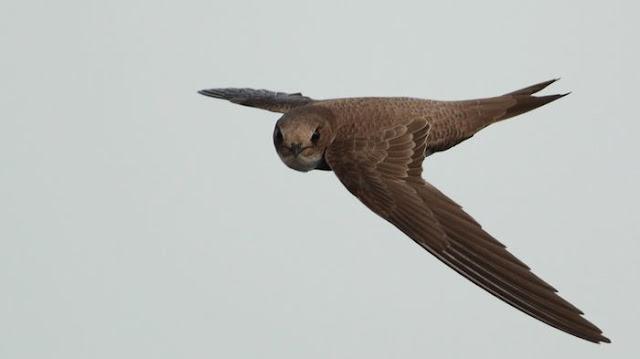 ebabil-kuşunun-hikayesi