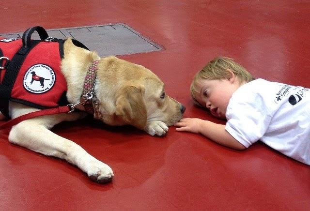 Perros de ayuda a personas con autismo