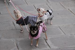 Campo San Margarita, Venice, dogs