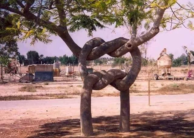 Como pode a natureza que cria essas formas estranhas de crescer simulando o vínculo entre as pessoas? Muito bom ao mesmo tempo estranho