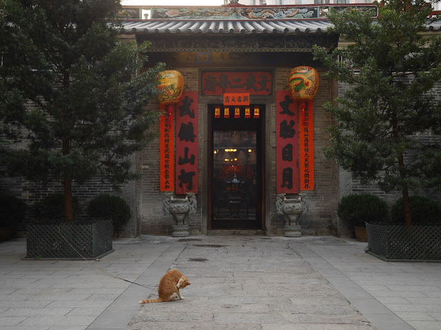 cat cleaning itself in front of the Man Mo Temple in Tai To, Hong Kong