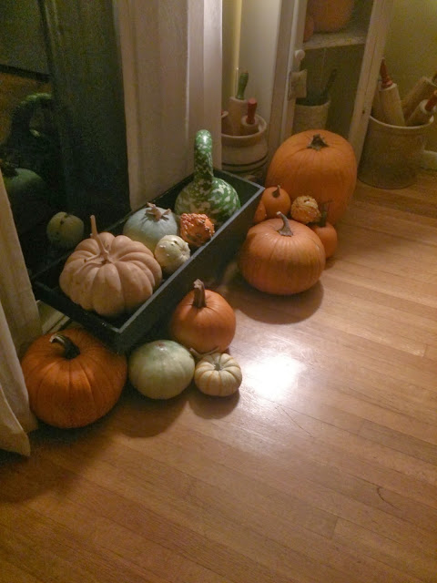 fall pumpkins and gourds