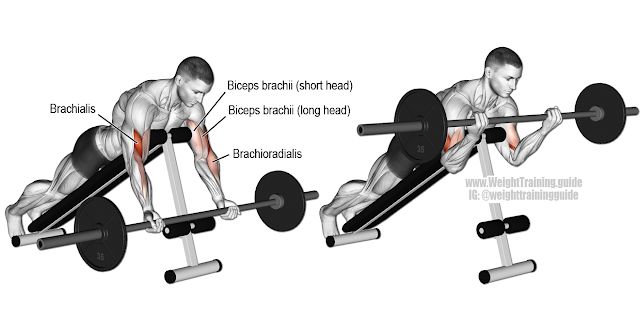 Best bicep workout