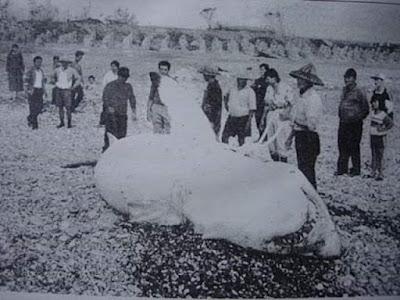 Gran Tiburón blanco Seven Stark Lake, Taiwan, 1997