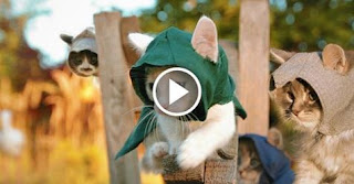 Assassin's Kittens – the fluffy hazard of the Assassin's Creed!