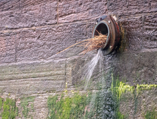 Photo of the pigeons' nest washed out of the drainage pipe