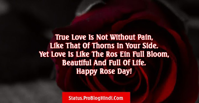 rose day status, happy rose day status, rose day wishes status, rose day love status, rose day romantic status, rose day status for girlfriend, rose day status for boyfriend, rose day status for wife, rose day status for husband, rose day status for crush