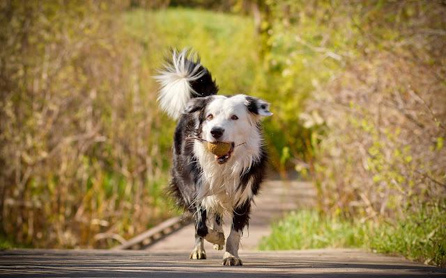 Hond met een bal in zijn bek